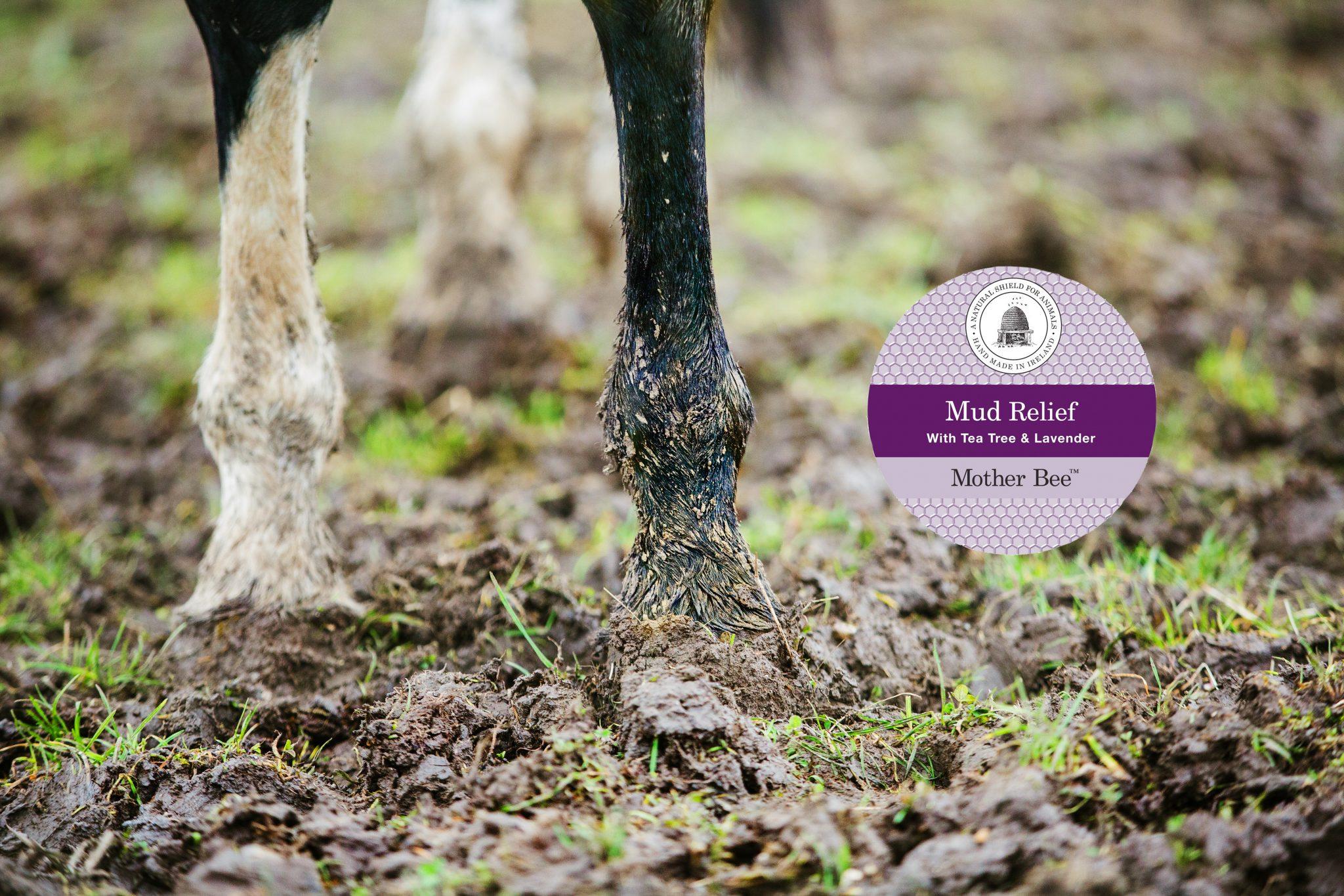 We take a look at Mud Fever (Pastern Dermatitis)